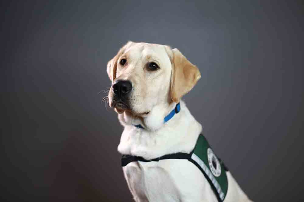 Service Dogs - Got Your Six - Support Dogs - Therapy Dogs